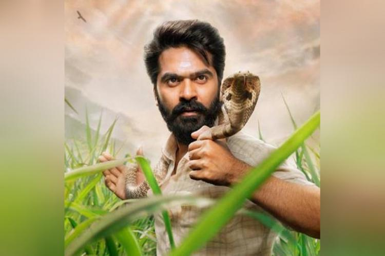 Simbu is seen with a king cobra wrapped around his neck