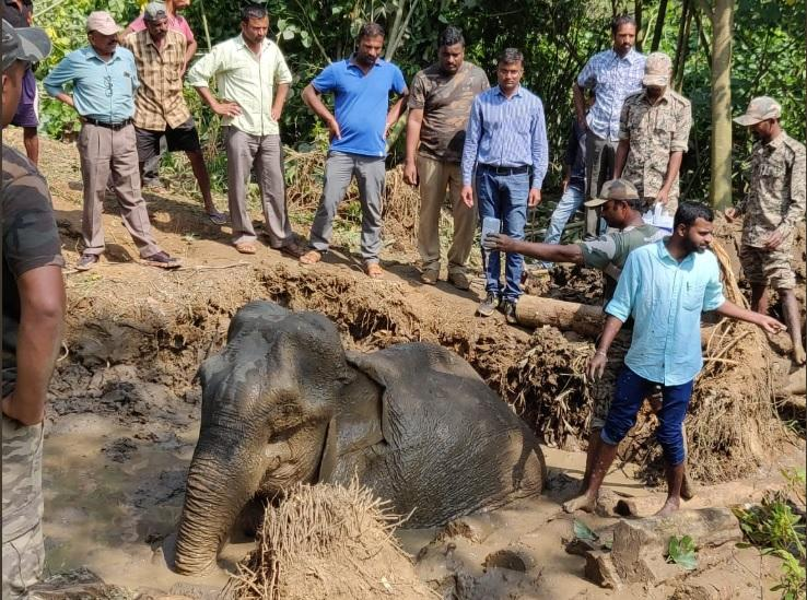 Elephant tragically passes away in Hassan despite rescue
