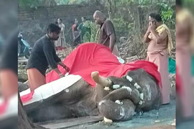 Famed Kerala tusker Balaraman dies animal activists blame improper care