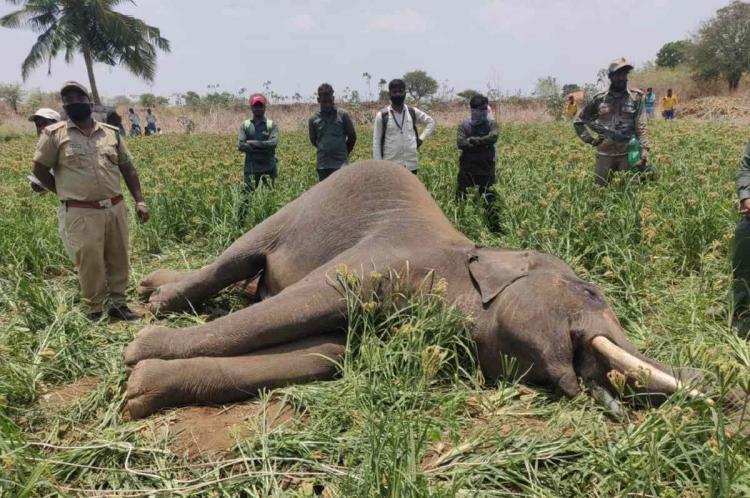 Elephant carcass found in Karnataka sanctuary