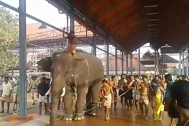 Elephants run amok at Guruvayoor temple during procession 3 injured
