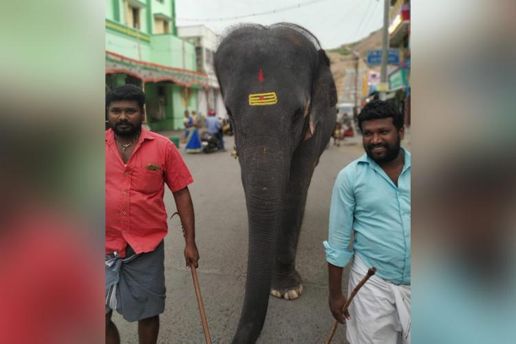 File image of elephant Deivanai taking a walk with her mahout Kalidasan wearing blue shirt