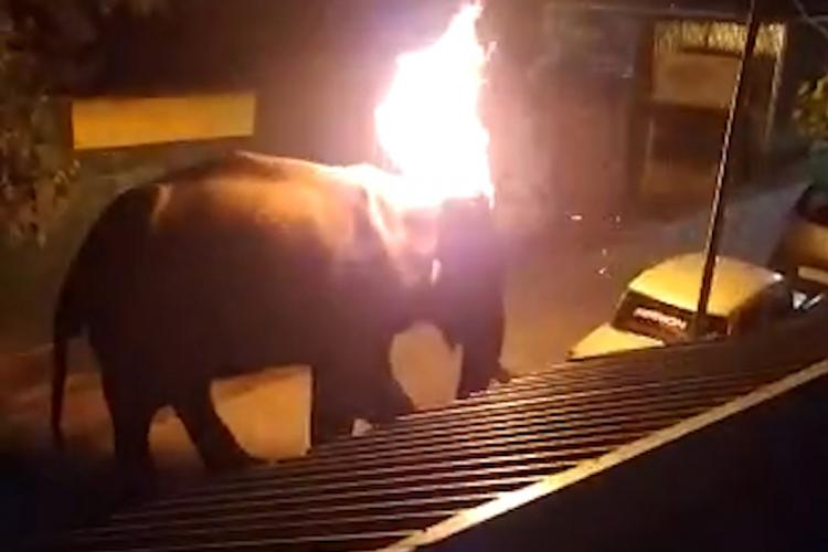 An elephant with its ear set on fire by some men after it entered human territory in the Nilgiris Tamil Nadu