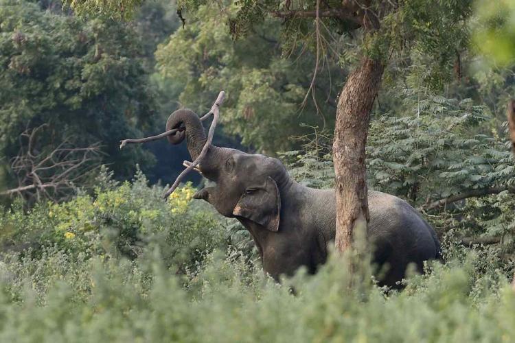 An elephant at Arignar Anna Zoological Park at Vandalur near Chennai