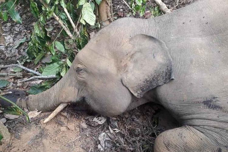 Representative image of an elephant lying on ground