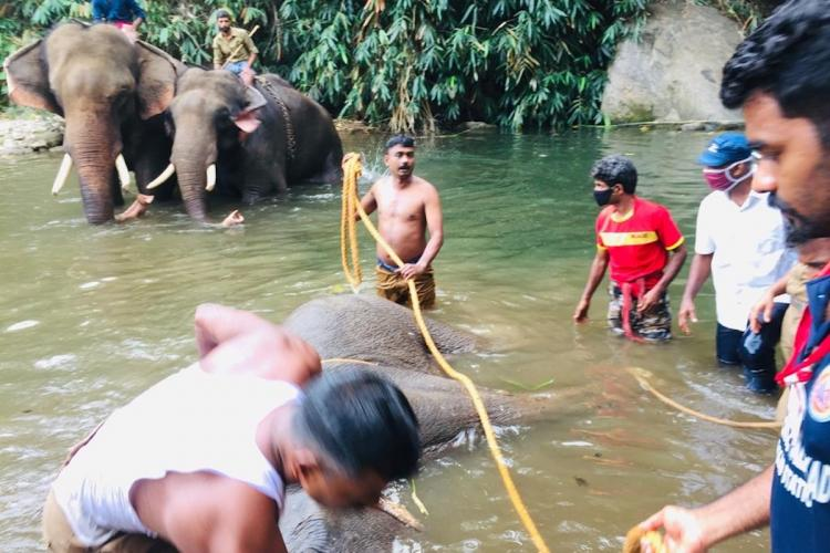 Pregnant Kerala elephant Eyewitnesses recount days leading up to death