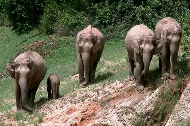 A 14-year-old Shiju Kani died on Wednesday in the human elephant conflict in the Komba region of the Neyyar wildlife sanctuary in Thiruvananthapuram district of Kerala