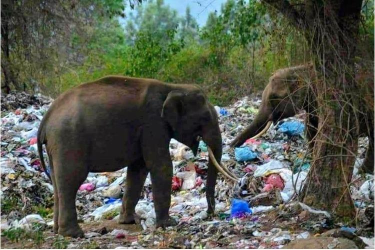 Explainer Why are elephants dying in Tamil Nadu