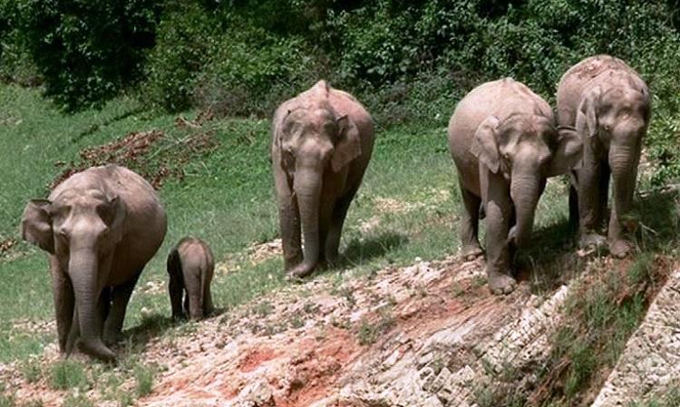 Kerala Forest Department to set up wild elephant sanctuary near Munnar