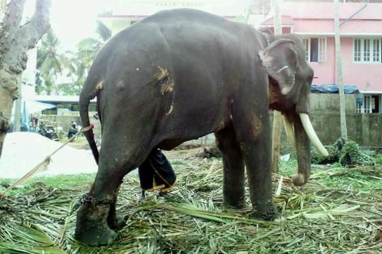 18 deaths in 6 months How can Kerala save its elephants