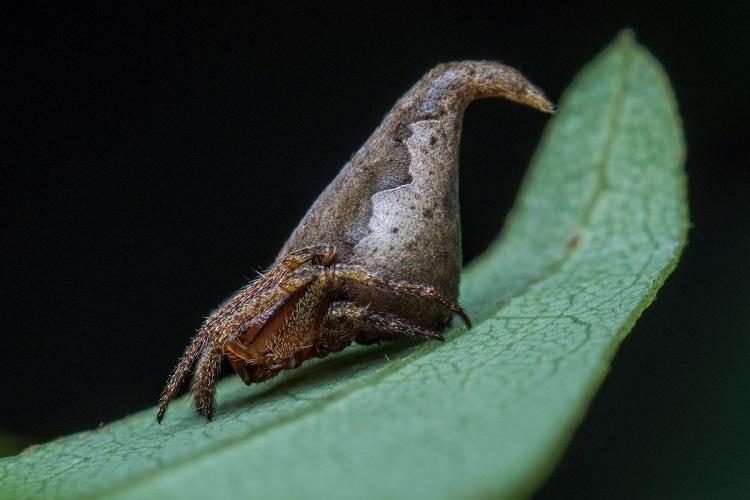 New species of spider found in Karnataka named after Harry Potter character