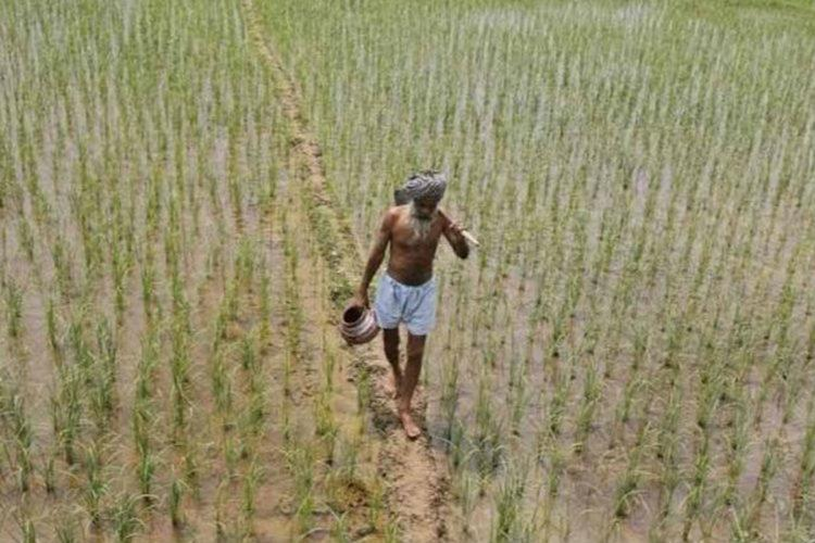 Farmer walking in his field with crops on either side during rainfall