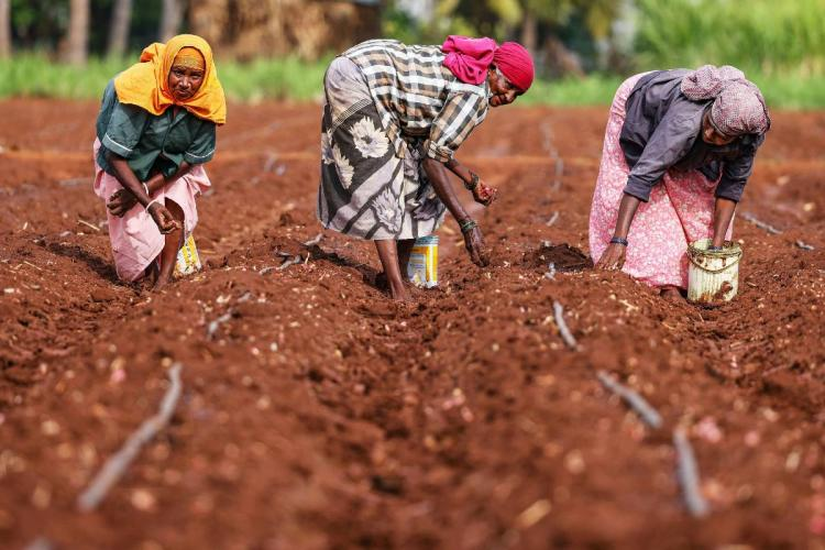 Three farmers working on a field
