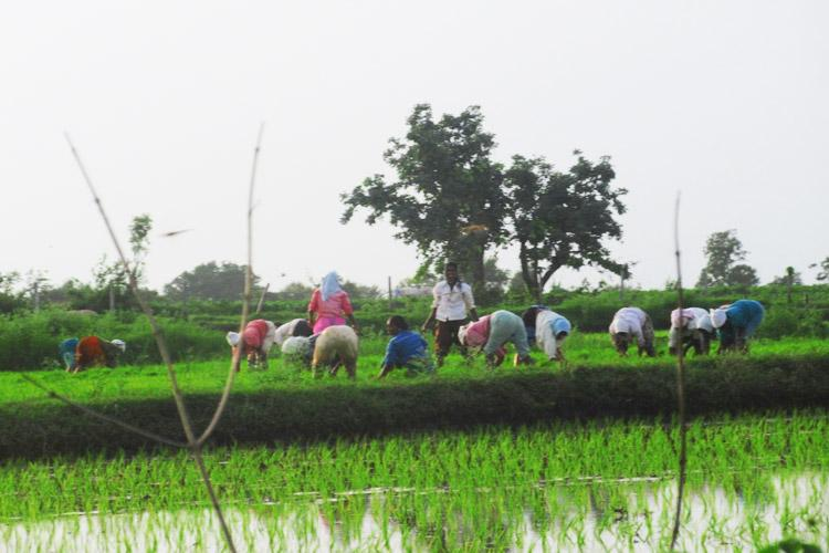 Telangana govt releases Rs 5100 cr to farmers as part of Rythu Bandhu scheme