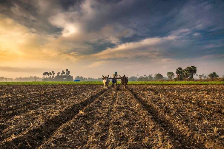 A farmer in the fields