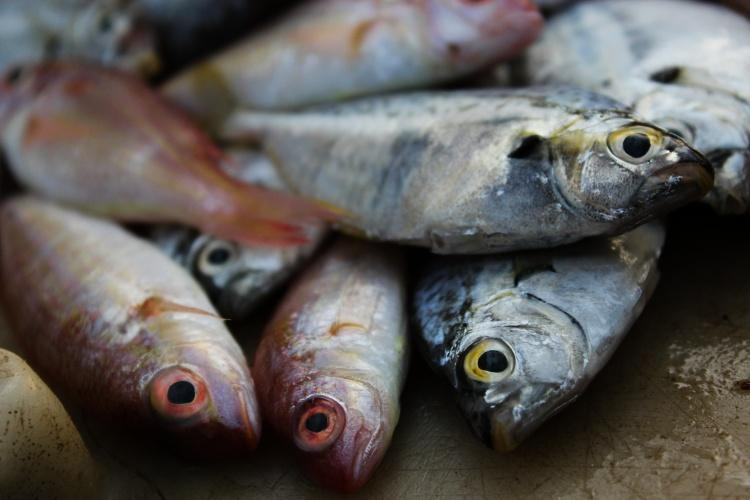 Bihar bans sale and storage of Andhra fish in Patna after formalin detected in samples