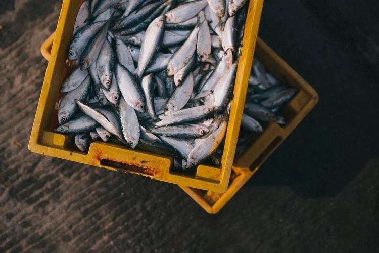 Decayed and adulterated fish enter Kerala market as fishing sector takes a hit