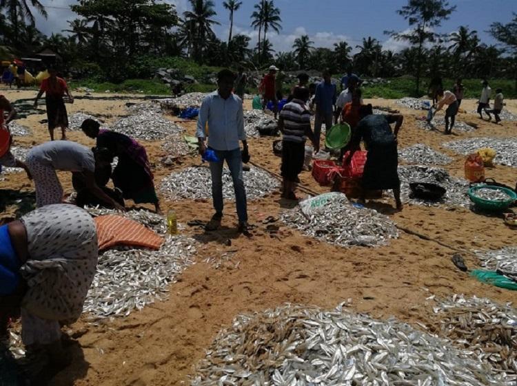 Traditional fishermen in Udupi net 5 tonne of fish in rare bumper haul
