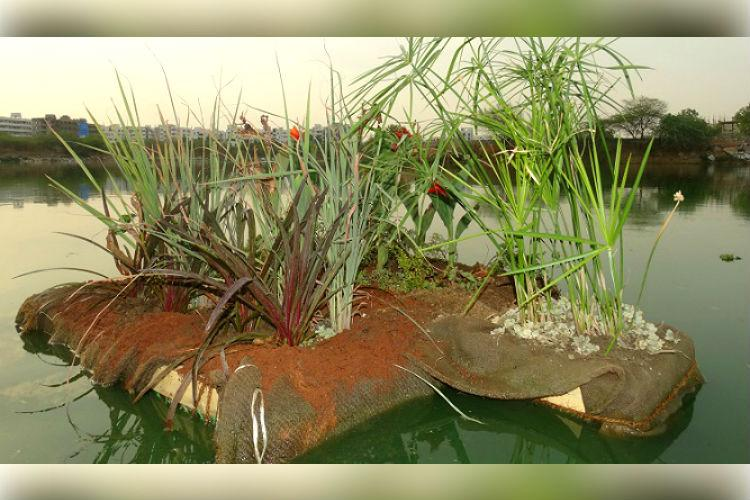 Spotted plants on thermocol floating on this Hyd lake Heres how they will clean it up
