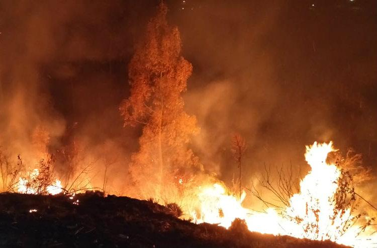 Forest fire destroyed 15 acres of land in Kerala