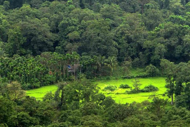 Representative image for forest