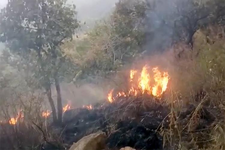 300 acres of forest land destroyed as fire breaks out in Sathyamangalam Tiger Reserve