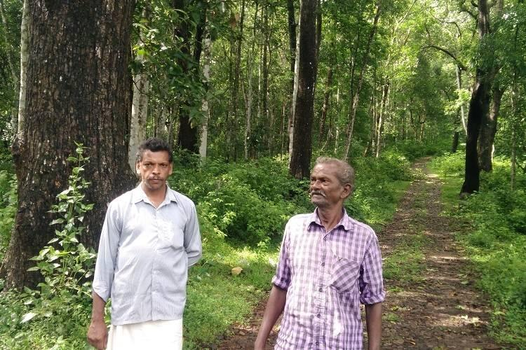 Where will Ponthanpuzha go 2833 hectares of Kerala forest land may soon be destroyed