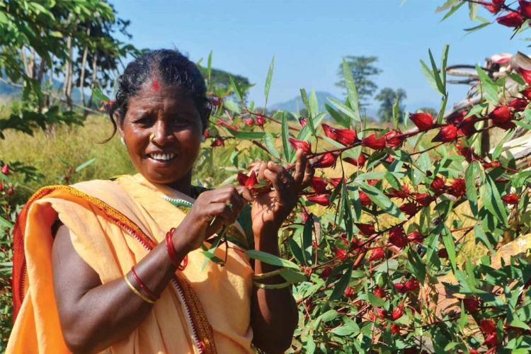 Woman standing posing near an edible plant for the Forgotten Foods Calendar by Sahaja Samrudha