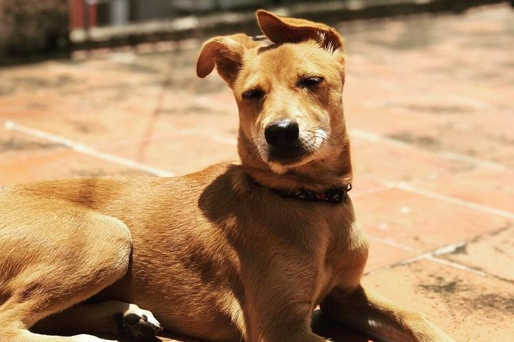 BBMPs bizzare pet policy Karnataka HC asks for revised regulations within a day