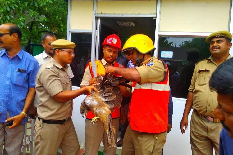 Eagle trapped in kite manja rescued near Telangana Assembly