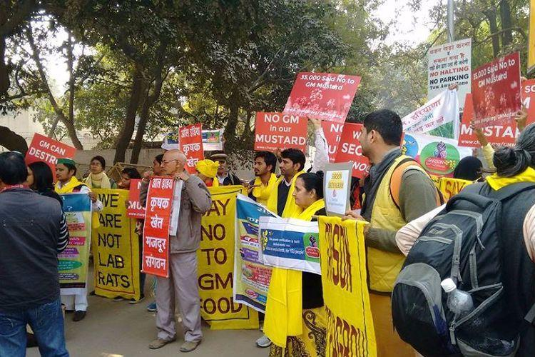 As GM Mustard inches closer to govts nod activist cry foul remind BJP of poll manifesto