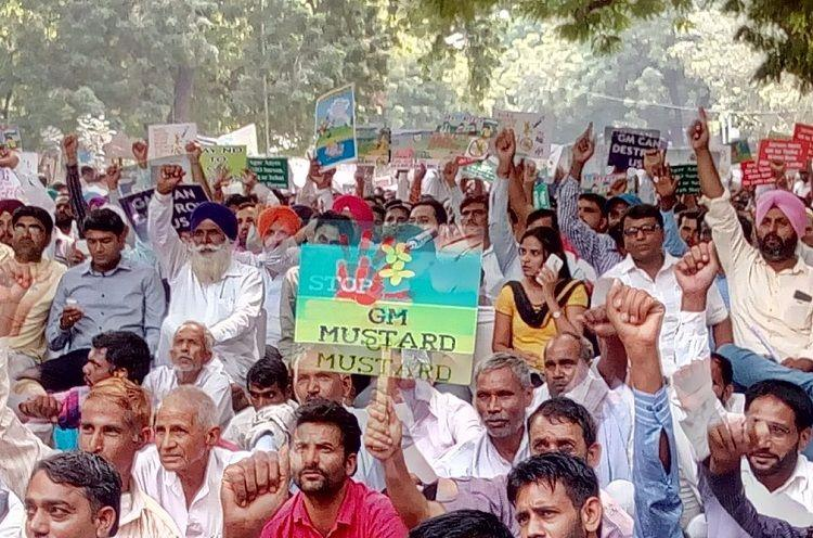 Activists across India say no commercial cultivation of GM mustard