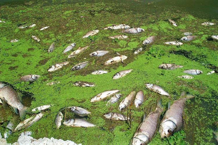 The dark side of Hyderabads pharma boom 23 lakh fish killed in one lake