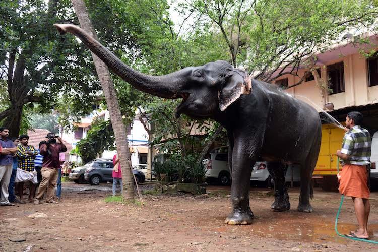 Granny Dakshayini Asias oldest captive elephant from Kerala passes away