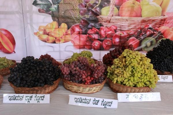 Grapes to dragon fruit the simple to the exotic Bengalurus Lalbagh has it all