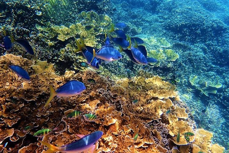 The Great Barrier Reef isnt listed as in danger but its still in big trouble