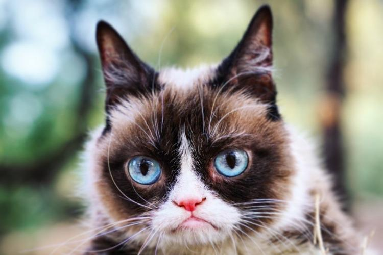 Goodbye Grumpy Cat Internet sensation cat that inspired viral memes dies at 7