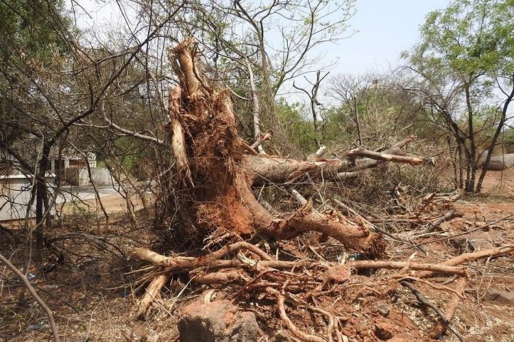 University of Hyderabad chops several trees on campus for new road activists cry foul