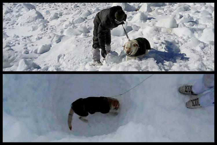 Meet Dot and Misha Two dogs which helped rescue Saichen army man