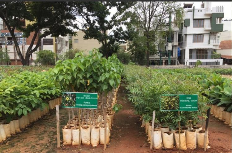 Ktaka Forest Dept to launch app to tackle crisis of dwindling tree cover in Bluru