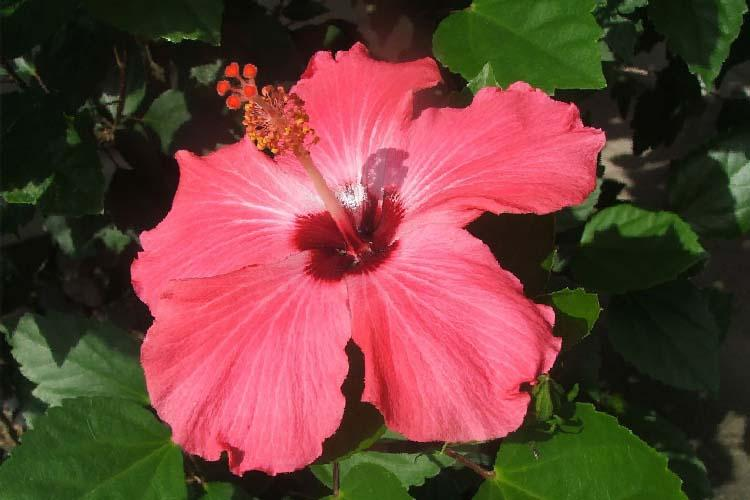 Vaginas fresh as a flower and other myths that need to be dispelled
