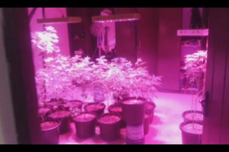 Video Hyd man turns 3BHK home into ganja cultivation centre 40 weed pots seized