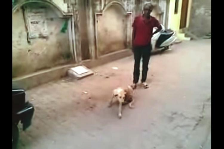 Hyderabad NGO offers Rs 10000 to identify man who tortured stray dog in viral video