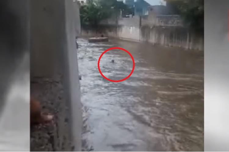 Video Man washed away in Hyderabad nala amidst heavy rain rescue attempts fail