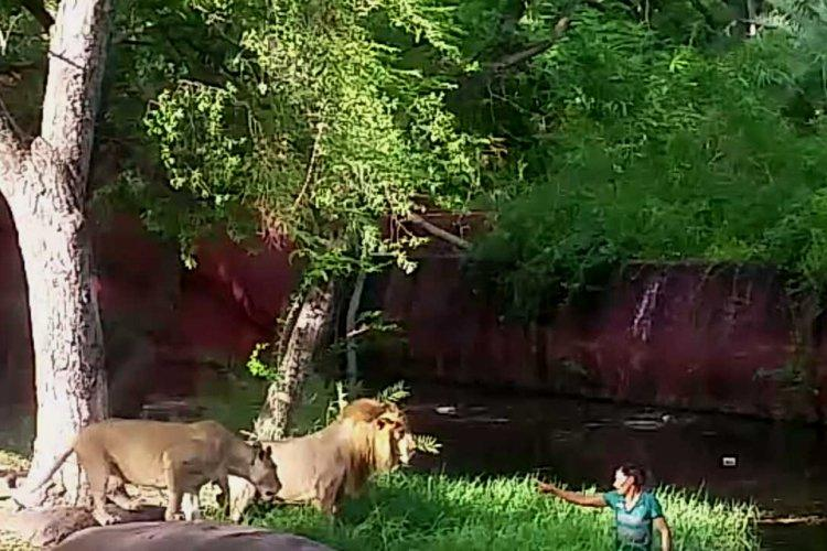 Drunk Hyderabad man who jumped into lion enclosure in zoo gets four months prison