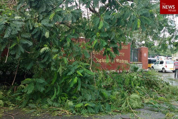 Over 600 non-native trees uprooted in IIT-M and Anna Uni during Cyclone Vardah
