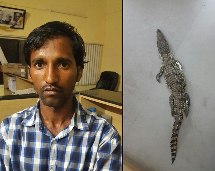 Bengaluru police arrest man with a croc hatchling