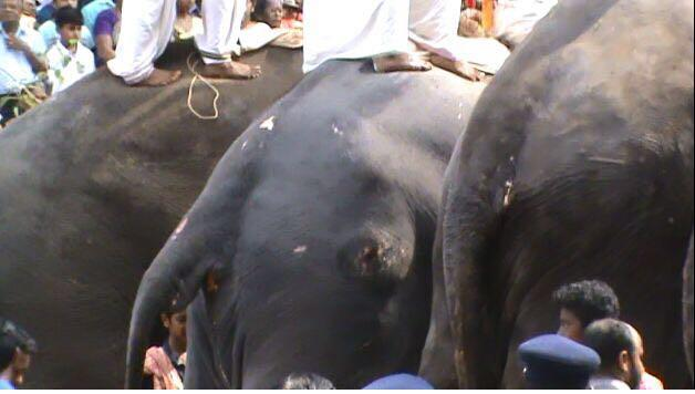 Armed with evidence of gaping wounds on elephants used in Thrissur Pooram NGO approaches Centre