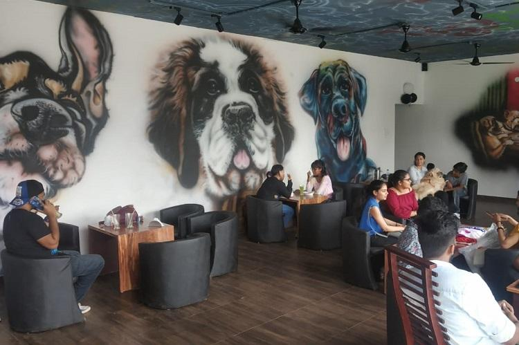 Mangaluru dog lovers a new cafe welcomes humans and their four-legged friends alike