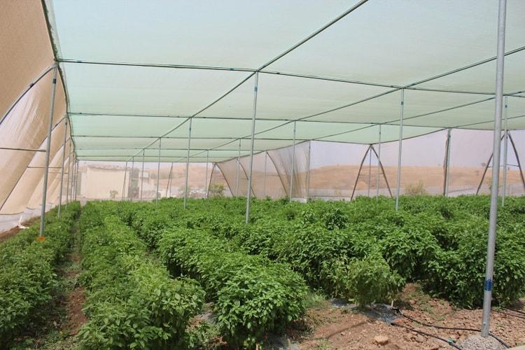 Making concept of Farm to Fork a reality Meet homegrown agritech startup EarthFood
